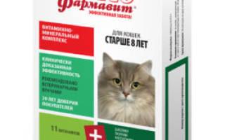 12 витаминов для кошек и котят: какие лучше, как давать, для иммунитета, от линьки