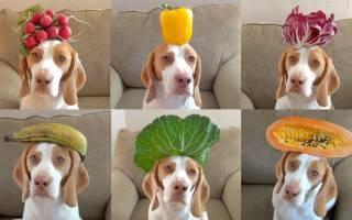 Какие овощи можно давать собакам: список разрешенных и запрещенных продуктов