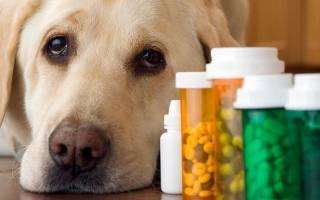 Цистит у собаки: симптомы и лечение в домашних условиях, призанки