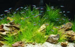 4 вида аквариумных рыбок неонов: уход и содержание, размножение в общем аквариуме