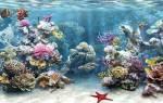 5 видов фона для аквариума: пошаговая инструкция как приклеить фон на аквариум