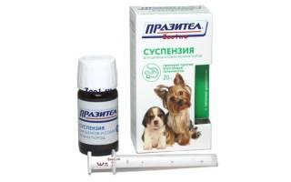 Празител: суспензия для щенков и собак мелких пород, инструкция по применению и противопоказания