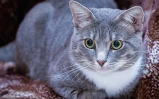 Преднизолон для кошек и собак: инструкция по применению