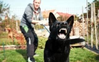 Собака или щенок рычит на хозяина: почему и что делать, как убрать агрессию