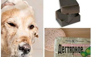 Дегтярное мыло от блох у кошек и собак: можно ли мыть и помогает ли