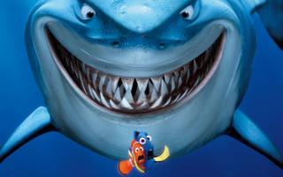 Аквариумные рыбки: таблица совместимости в одном аквариуме, какие виды можно держать вместе