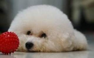 10 препаратов от глистов (антигельминтных) для собак: таблетки, капли, уколы