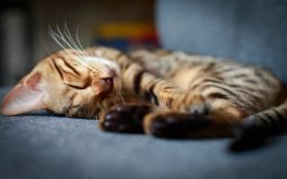 Успокоительные средства для кошек: в дорогу, при стрессе и агрессии