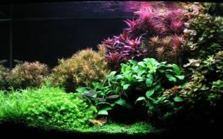 Аквариумные растения: неприхотливые для начинающих, названия, как оформить и украсить аквариум