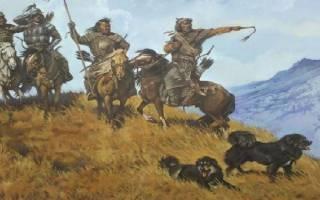 Монгольская овчарка (банхар): описание и характеристика породы, содержание и уход