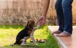 Клички для собак мальчиков и девочек: мелких пород, средних и крупных