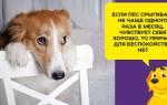 Как вызвать рвоту у собаки: собаку рвет желчью и отказывается от еды, рвота белой пеной