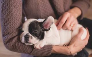 Конъюнктивит у собак: лечение в домашних условиях, симптомы и разновидности, профилактика болезни