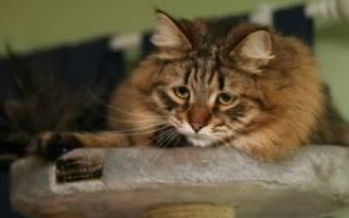 8 видов паразитов у кошек, которые передаются человеку: симптомы и лечение