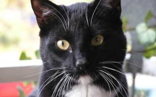 5 причин, почему ломаются усы у котов, кошек или котят: причины выпадения и профилактика
