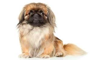 15 самых больших собак в мире: описание породы и стоимость