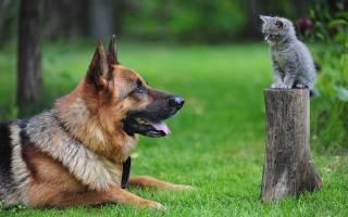 Сравнение собак и котиков: кто лучше, кого выбрать в качестве домашнего питомца