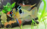 Как назвать рыбку: имена для самок и самцов, петушка и других видов