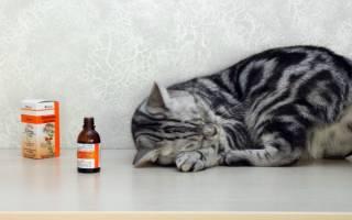 Почему коты и кошки любят валерьянку: как она на них действует, что будет, можно ли давать