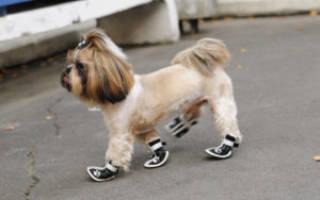 Обувь для собак своими руками: как сшить своими руками, пошаговая инструкция