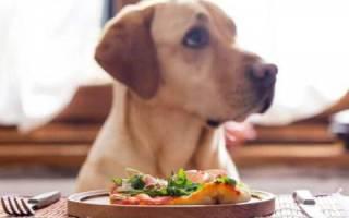 Сухой корм или натуральный для собак: чем лучше кормить собаку
