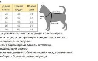 Комбинезон для собаки своими руками: выкройка, удобная схема, пошив в домашних условиях