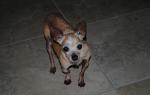 Рахит у собак: симптомы, лечение и профилактика, страшные последствия