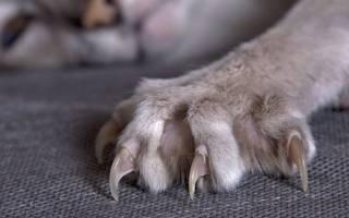 4 проверенных, как отучить кошку драть обои и мебель: спрей, когтеточка, накладки, народные средства