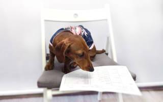 Как получить родословную РКФ для собаки: что это и как сделать документы
