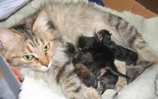 Когда котята открывают глаза: через сколько дней котята открывают глаза после рождения
