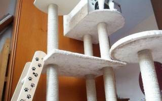Как сделать правильный игровой комплекс для кошки своими руками