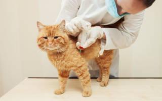 Расшифровка 12 показателей анализа крови у кошки: щелочная фосфатаза, панкреатическая амилаза, коэффициент ритиса