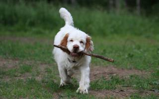 10 самых интересных фактов о собаках: умения и особенности, интересная информация