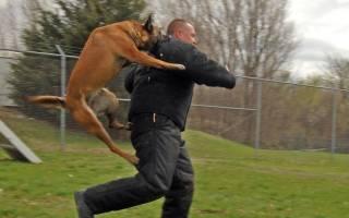 6 причин нападения собак на людей: как правильно себя вести