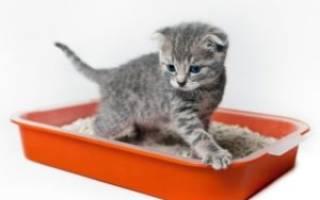 Как быстро приучить котенка к лотку: в квартире и с наполнителем