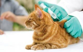 Вакцина поливак тм для кошек: инструкция по применению