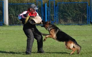 Защитно-караульная служба (ЗКС) для собак: что это такое, навыки и польза от обучения