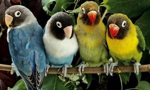 Какого попугая лучше завести в квартире или доме: выбор из 4 видов
