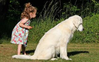 10 лучших пород собак для квартиры и детей: какую собаку лучше завести в квартире