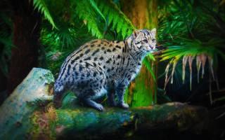 Кот рыболов (вивверовый): описание и образ жизни, характер и повадки кошки, возможность содержания дома