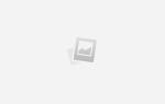 9 гипоаллергенных кошек: какие породы, не вызывают аллергию у людей