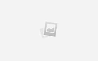 Собаки дворняжки или беспородные собаки: описание, содержание и уход